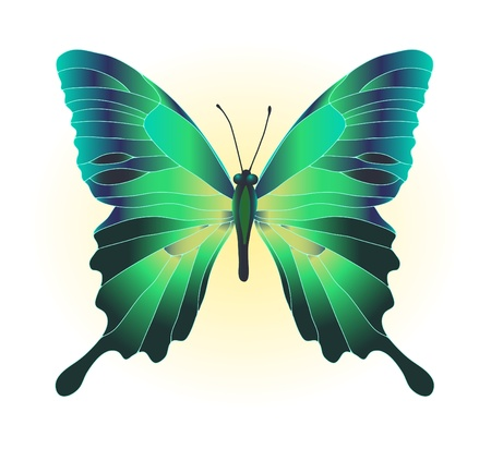 mariposa verde: Ilustraci�n vectorial de hermosa mariposa verde