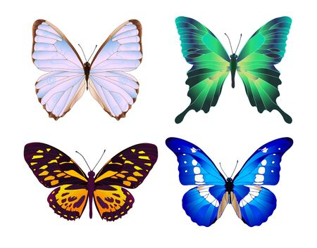creative arts: Set of four colorful butterflies Illustration