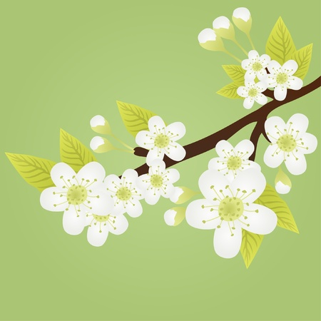 apple clipart: Vector illustration of apple-tree branch with flowers isolated on green