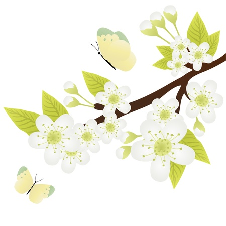 appletree: Vector illustration of apple-tree branch with flowers and butterflies fluttering over it Illustration
