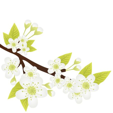 orchid tree: Vector illustration of apple-tree branch with flowers isolated on white Illustration