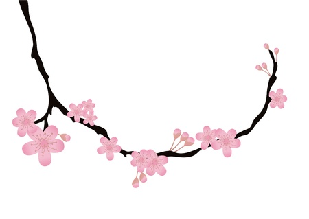 Vector illustration of cherry-tree branch with flowers in bloom