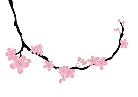 kersenbloesem: Vectorillustratie van kersen-boomtak met bloemen in bloei