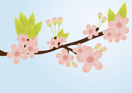 orchid tree: Vector illustration of cherry-tree branch with flowers isolated on blue