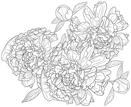 peony black: Vector illustration of monochrome background with peonies