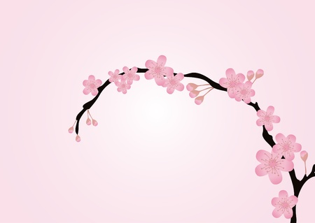 Vector illustration of cherry-tree branch isolated on pink  Vector