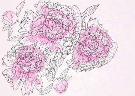 Vector illustration of beautiful floral background with pink peonies  Ilustracja