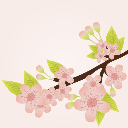 Vector illustration of cherry-tree branch in bloom isolated on pink  Vector