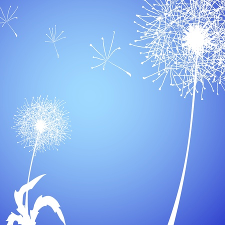 Vector illustration of white dandelions against blue background Vector