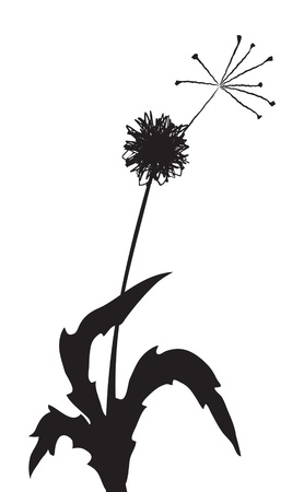 Vector illustration of a dandelion outline with one fuzz Stock Vector - 9415174