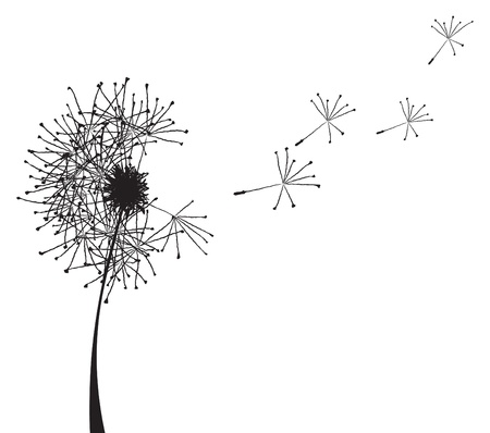 white flower: Vector illustration of a dandelion outline loosing its fuzzes