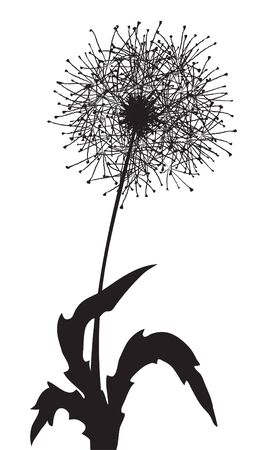 Vector illustration of a fluffy dandelion outline Vector