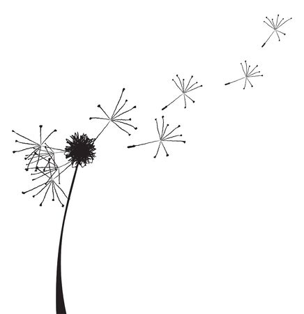 black seeds: Vector illustration of a dandelion outline with fuzzes flying off it Illustration