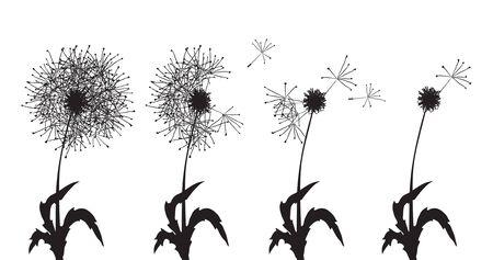 Vector illustration of several dandelions loosing their fuzzes Vector