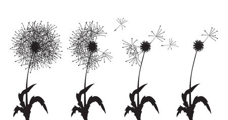 clip art draw: Vector illustration of several dandelions loosing their fuzzes