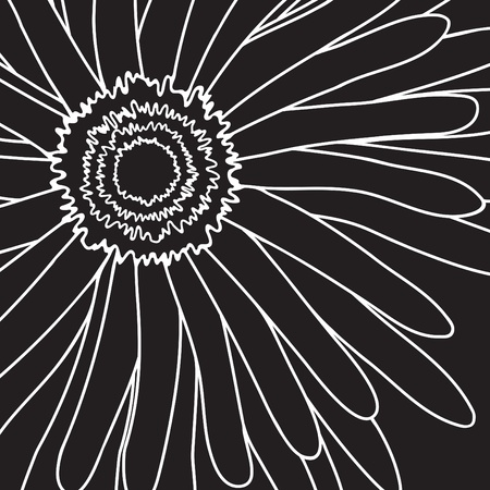 florist: illustration of white drawing gerbera on a black background