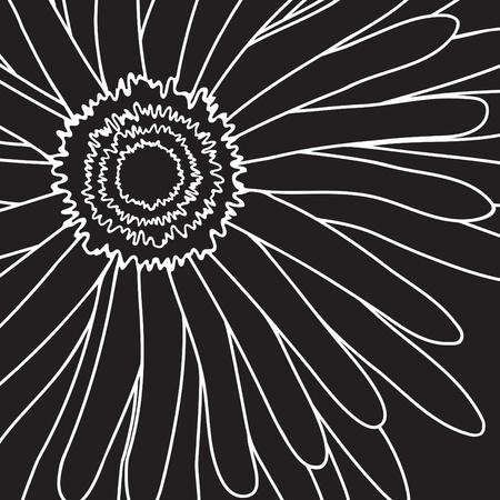 gerbera daisy: Ilustraci�n de gerbera dibujo blanco sobre un fondo negro