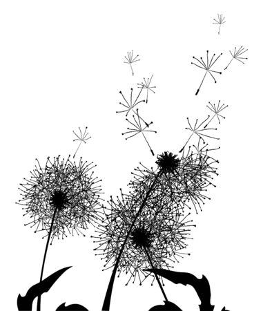 illustration of silhouettes fluffy summer dandelions Vector