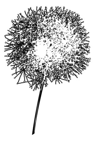 Dandelion outline loosing its fuzzes on a white background  Vector