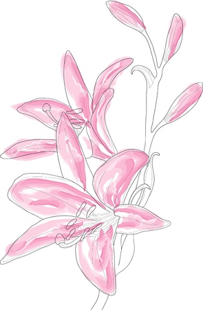 clip art draw: Vector illustration of beautiful pink lilly