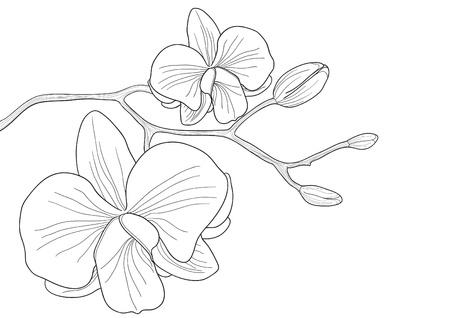 Vectorillustratie van de orchideebloem op witte achtergrond  Vector Illustratie