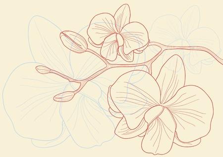 Vector illustration of beautiful orchid flowers  Ilustracja