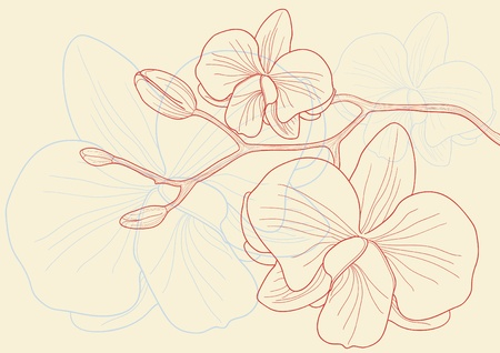 clip art draw: Vector illustration of beautiful orchid flowers  Illustration