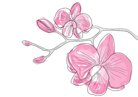 Vector illustration of pink orchid flowers Illustration