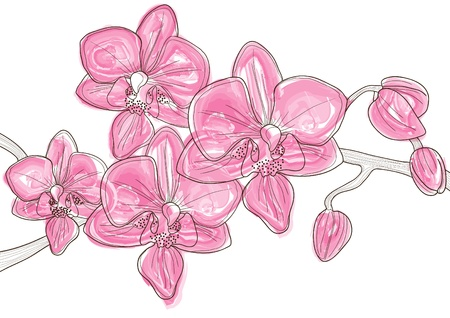Vector illustration of beautiful twig of pink orchid   Ilustracja