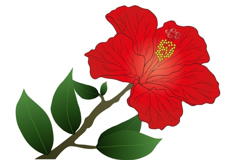 clip art draw: Vector illustration of red hibiscus flower with leaves
