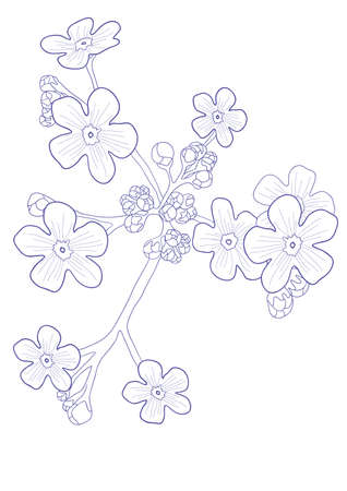 Vector illustration of beautiful wildflower - forget me nots Vector