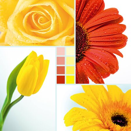 Collage of yellow tulip, rose and two herberas photo