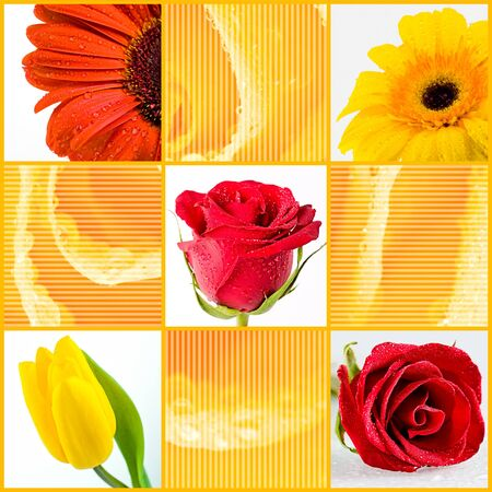 Collage with different spring flowers on floral background photo