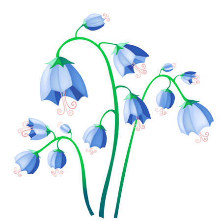 illustration of blue bells isolate on background   illustration