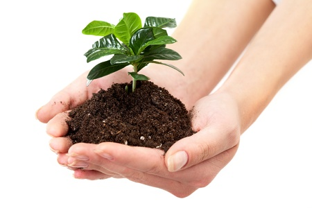 Close-up of fresh branch with leaves in soil held by a human Stock Photo - 9727119