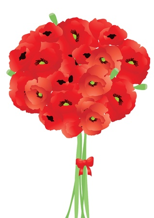Vector illustration of bright bouquet of red poppies   Vector