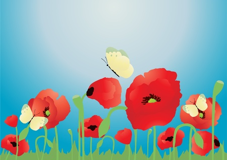 Vector illustration of red poppies over blue background   Vector