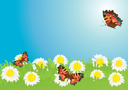 Vector illustration of beautiful butterflies hovering over chamomile meadow Vector