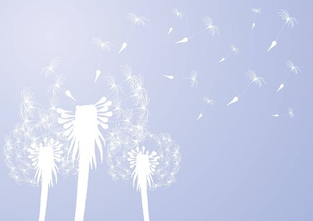 Vector illustration of fragile dandelions on windy day   Vector