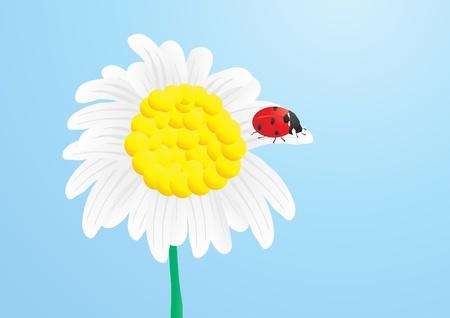 Vector illustration of beautiful ladybug on delicate chamomile Stock Vector - 9722051