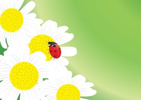Vector illustration of beautiful ladybug on blooming chamomile   Vector