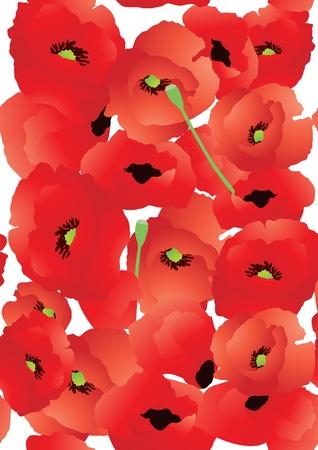 Vector illustration of bright poppy background   Vector