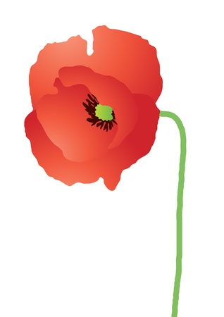 opium: Vector illustration of beautiful red poppy over white background
