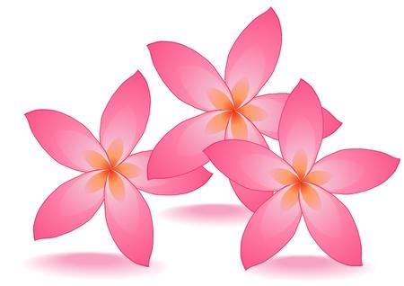 illustration of three rose flowers
