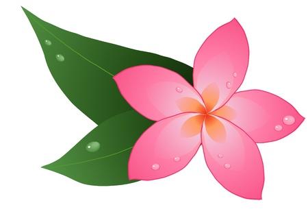 illustrazione di un rosso plumeria su foglie