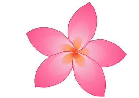illustration of pink frangipani flower isolated on white     Stock Vector - 9727389