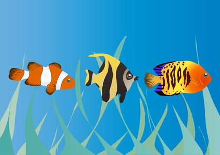 illustration of three tropical fishes in the sea