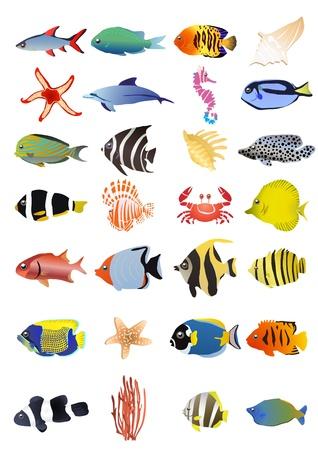 Collection of marine animals, illustration