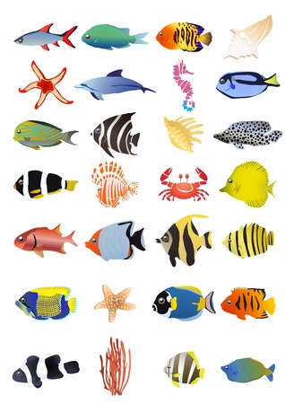 Collection of marine animals, illustration  Vector