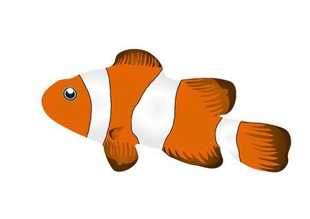 pez payaso:  Ilustraci�n de pez payaso aislado sobre fondo blanco